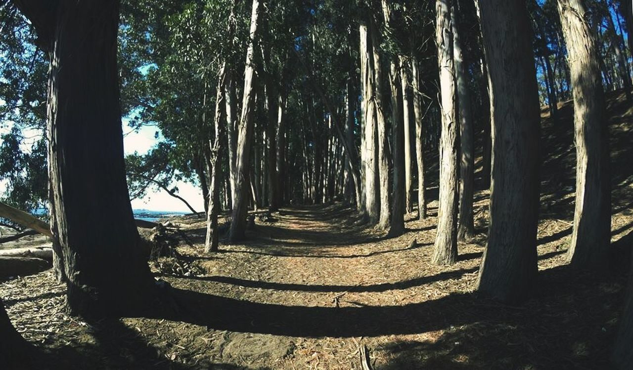 tree, nature, forest, tree trunk, sunlight, tranquility, tranquil scene, shadow, beauty in nature, day, landscape, no people, scenics, outdoors, growth, branch