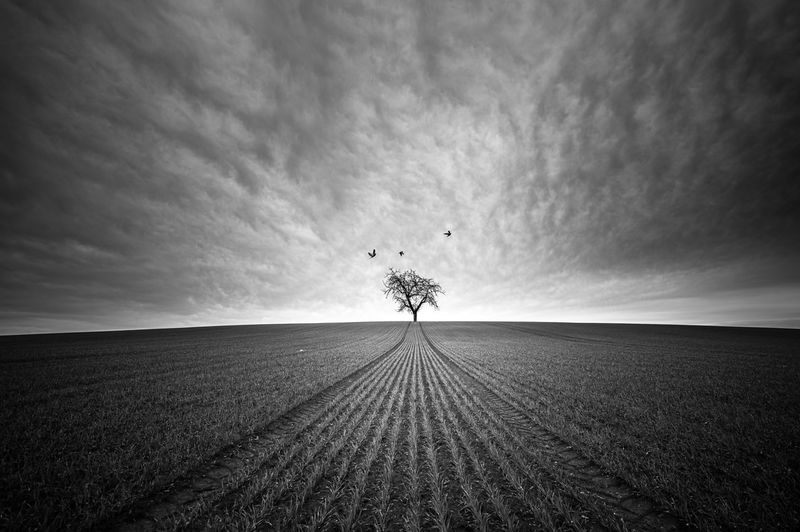Agriculture Beauty In Nature Birds Black & White Blackandwhite Cloud Day Field Field Fragility Growth Landscape Landscape_Collection Minimalism Minimalobsession Nature Nature Nature Photography No People Outdoors Rural Scene Sky Sky And Clouds Symetry Tree EyeEmNewHere