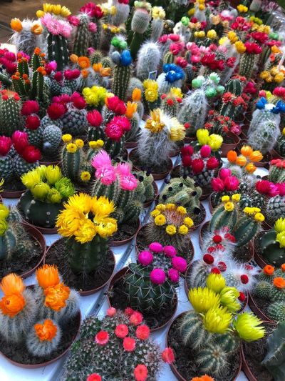 EyeEmNewHere Famous Place Culture Tourism Destinations Tourism Market Flowering Plant Flower Multi Colored Freshness Plant Variation Choice Abundance High Angle View Retail  No People Day Beauty In Nature Vulnerability  Large Group Of Objects Full Frame Fragility Flower Head Nature For Sale