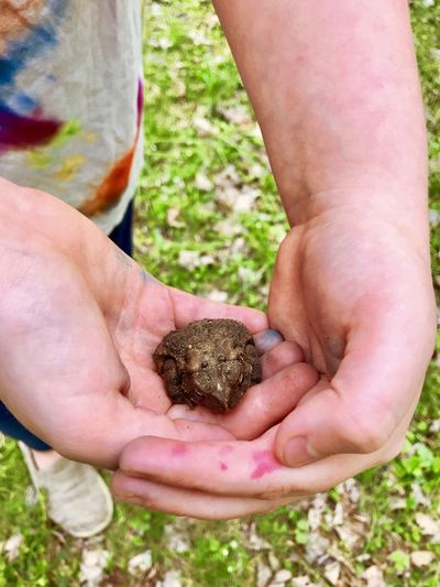 My daughter holding a toad Toad Amphibian Holding Child Hands Human Hand Hand One Animal One Person Holding Human Body Part Day Animal Wildlife Focus On Foreground Close-up Real People Dirt Nature Outdoors Animals In The Wild Hands Cupped Small