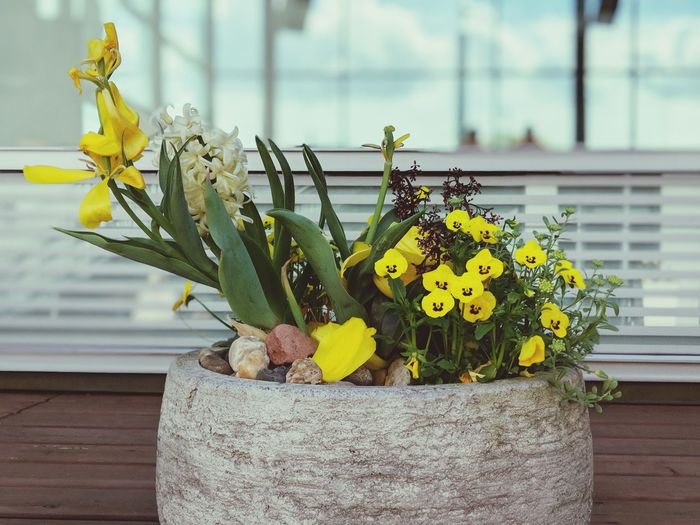 Close-up of yellow flower pot against wall