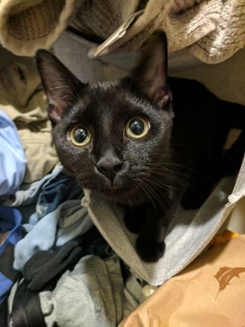 Black Kitten Domestic Cat Animal Themes Bad Cat Pets Domestic Animals Animal One Animal Feline No People Portrait Indoors  Looking At Camera Mammal Pet Clothing Bed Kitten Close-up Day