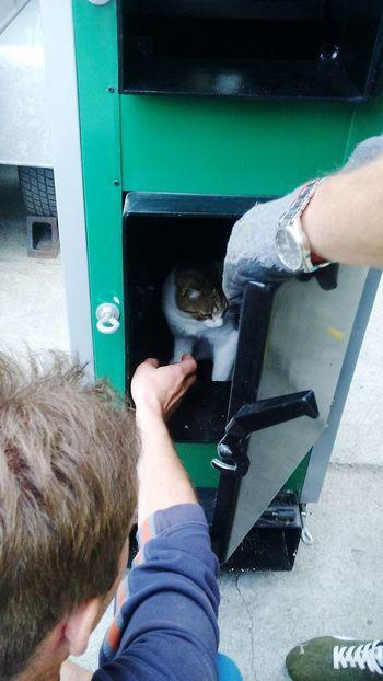 Hello Word ✌ Summer ☀ C'est La Vie Hasztagnieznane Animal Love Catlover My Homeboy Cats Of EyeEm Cats 🐱