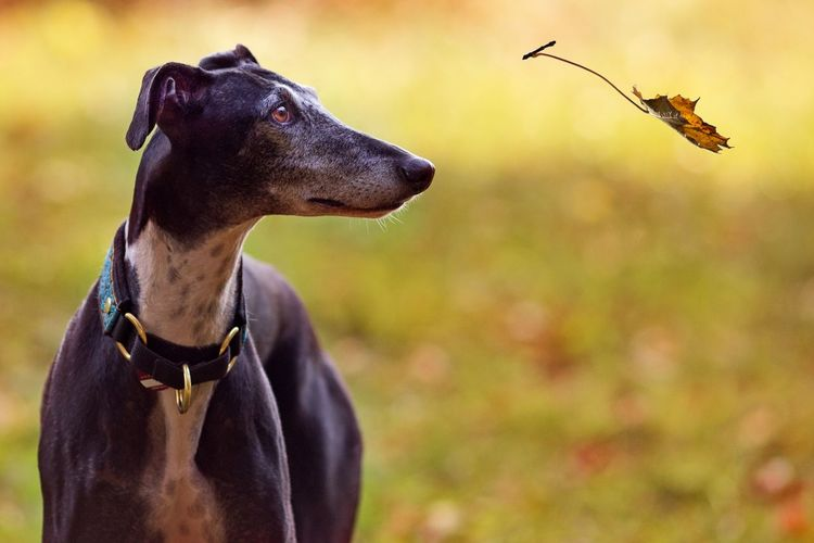 Close-up of dog looking at leaf