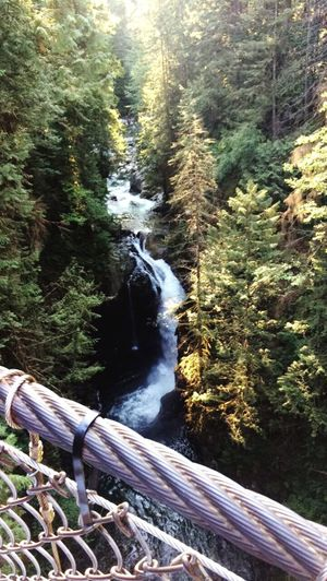 British Columbia Vancouver Tree Water Flowing Water Forest Waterfall Suspension Bridge Nature Outdoors River No People
