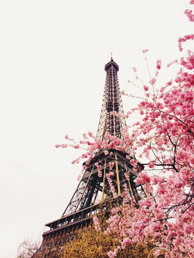 Spring Into Spring Sakura Pretty Flowers Romantic Eiffel Tower Traveling Being A Tourist EyeEm Bestsellers