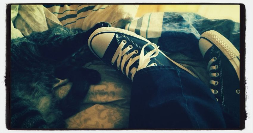 Taking Photos Cat Converse Hello World