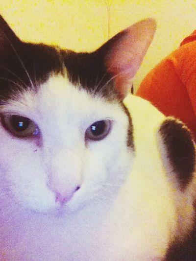My Crazy Cat 😚 Love Miau