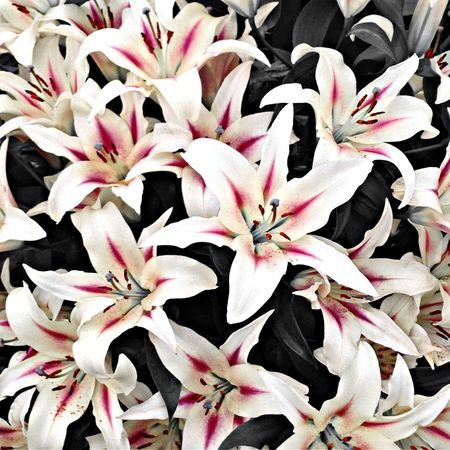 Flower Porn EyeEm Nature Lover EyeEm Best Shots