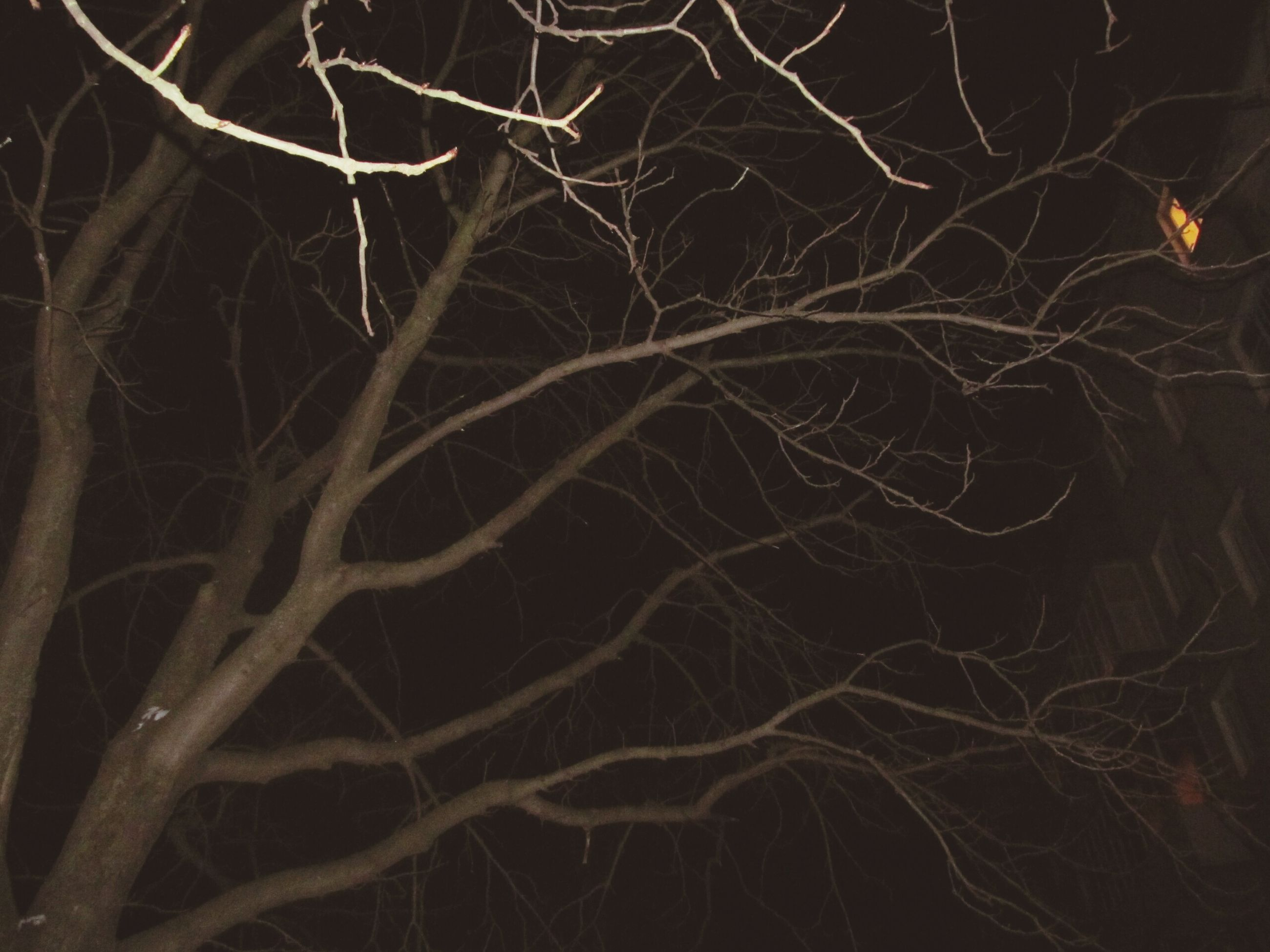 night, illuminated, dark, bare tree, glowing, low angle view, light - natural phenomenon, long exposure, abstract, branch, outdoors, backgrounds, no people, black background, light, sky, full frame, tree, lighting equipment, nature