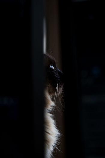 Jato Low Key Animal Cat Domestic Animals Feline Indoors  No People One Animal