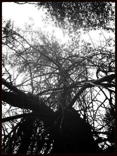 TreePorn KCe Filter