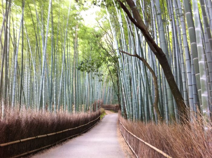 Bamboo Green Japan Landscape Ultimate Japan