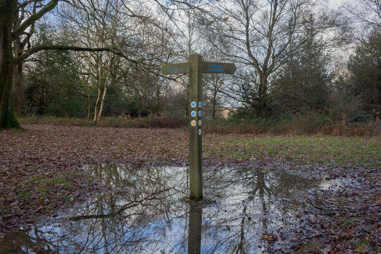 Nature Forest No People Tranquility Outdoors Non-urban Scene Beauty In Nature Scenics - Nature Reflection Sign Post In The Woods