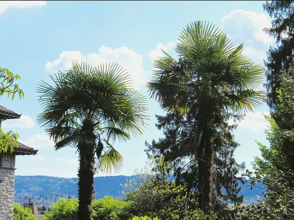 Palms Botanical Garden Beautiful Nature Nature Photography Botanical Garden Zuerich
