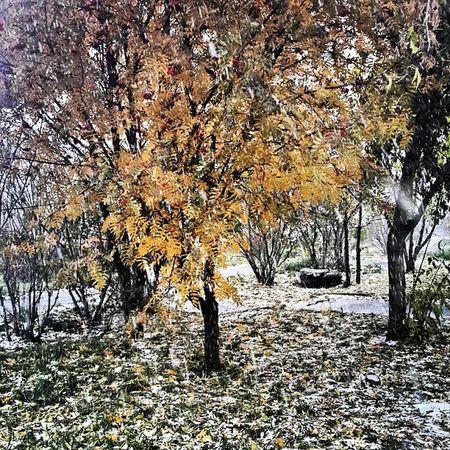 такая Осень... (: зимаблизко октябрь взлетка  красноярск