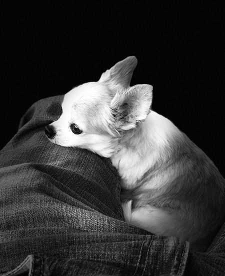 Pets Dog Puppy Pet Portraits Close-up Tranquil Scene No People