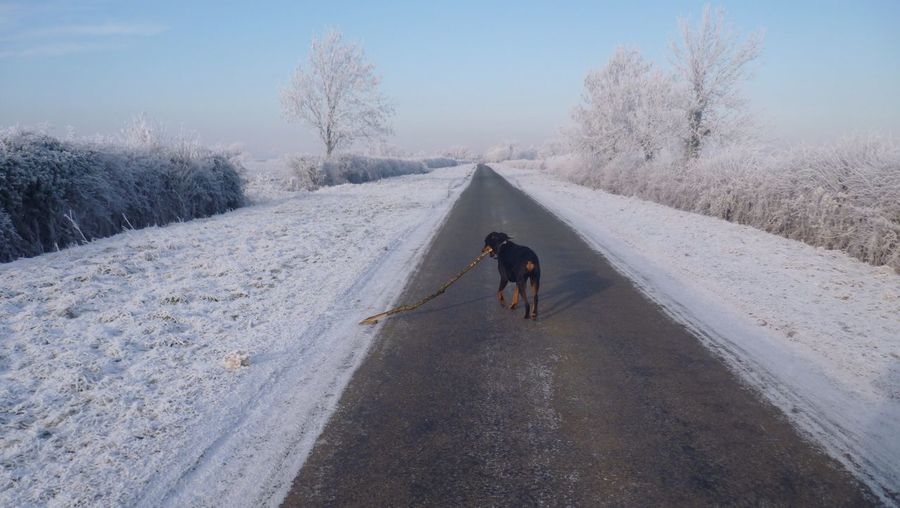 Dog on road amidst field during winter