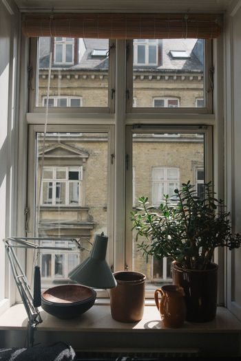 Potted plant with containers on window sill at home