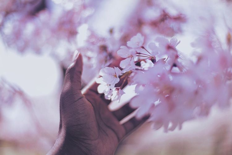 Close-up of woman hand with pink flowers