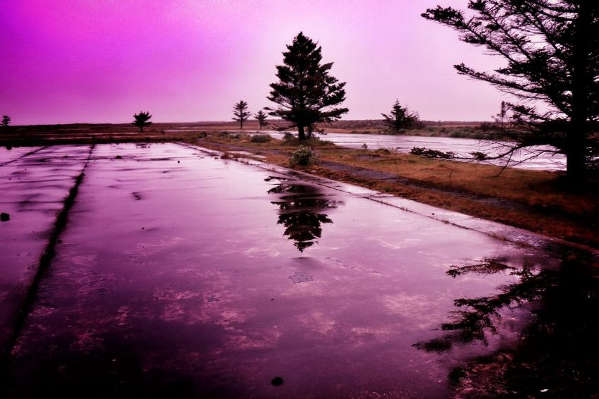 Pink Color Pink Filter Reflection_collection Capture The Moment Beauty In Ordinary Things Rainy Days Contryside Tree_collection  Pink Mood
