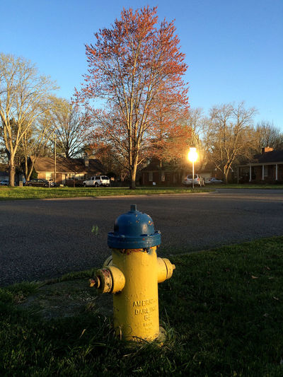 a fire hydrant on my street sits and waits and brings unnoticed comfort. Blue Bright Clear Sky Fire Hydrant Glare Grass Grassy Green Illuminated Lawn Outdoors Reflection Residential  Sky Street Sun Sunlight Tree Yellow Landscapes With WhiteWall