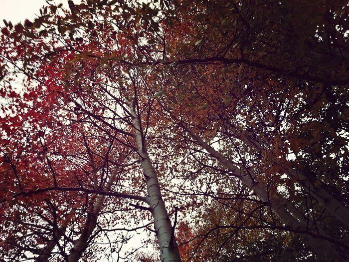 FoodP Filter Autumn Leaves TreePorn