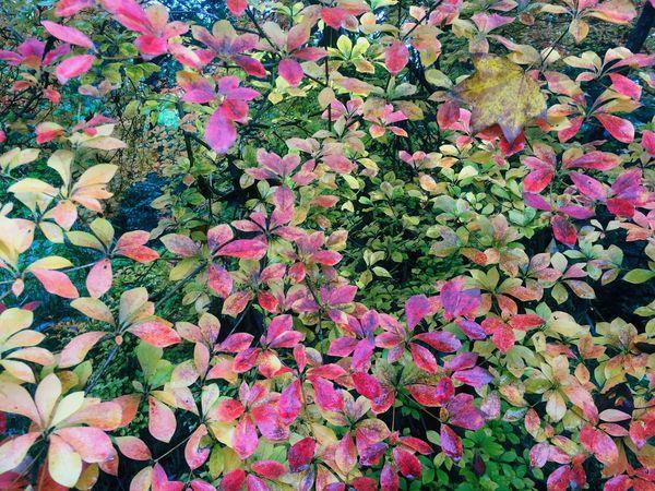 Autumn Autumn Leaves Autumn Colors Fall Colors Fall Leaves Colors Of Autumn Colors Of Nature