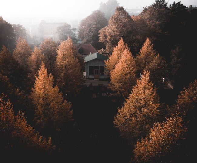 Autumn hut.