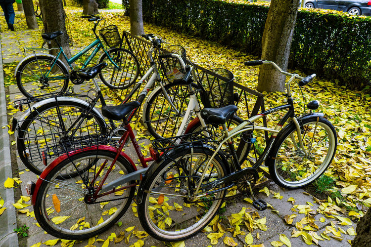 Bicycles parked by tree in city