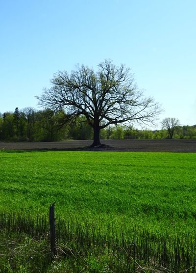 """ Green Acres & Trees Company "" * * * Agriculture Beauty In Nature Clear Sky Farming Land Field Grass Green Color Land Landscape Nature No People Outdoors Rich Color Rural Scene Scenics - Nature Tranquil Scene Tranquility Tree"