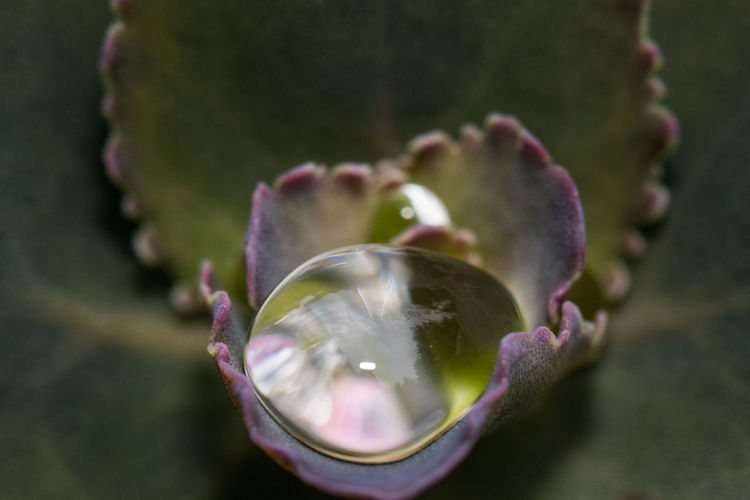 Close-up of raindrops on flower