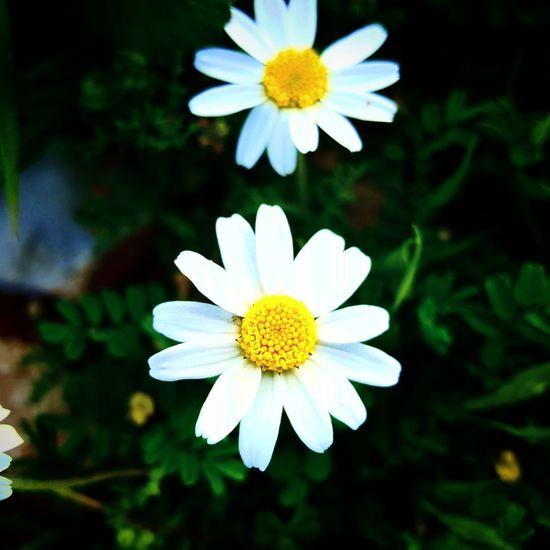 Flawers Iran Flowers Taking Photos گل طبیعت ایلام ایلام Nature طبیعت ایران منظره طبیعت ایران Ilam Nature Nature Photography Iran Nature Flowers Of The World.