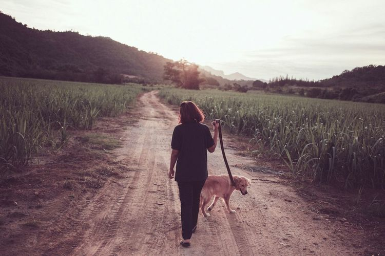 Rear view of woman walking with dog on field against sky