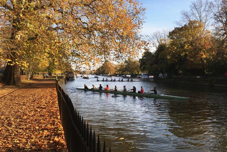 Autumnal Oxford Boats. Oxford Rowing Boats Autumn Autumn Colors Water River Nature Boat Autumn Leaves