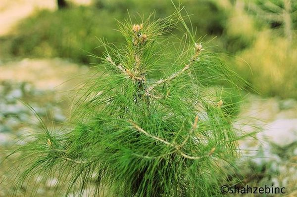 Plants are essentials. Naturalphotography Greenplants Islamabad Shahzebinc