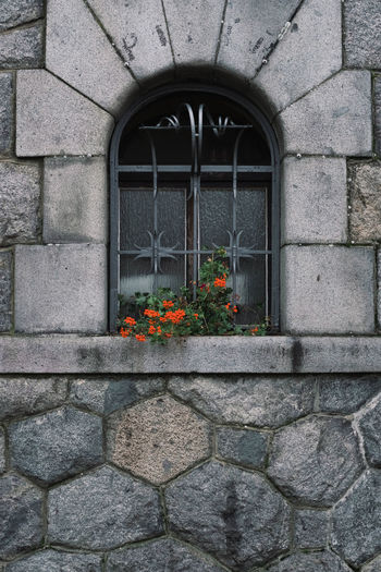 Flowers on window of old house