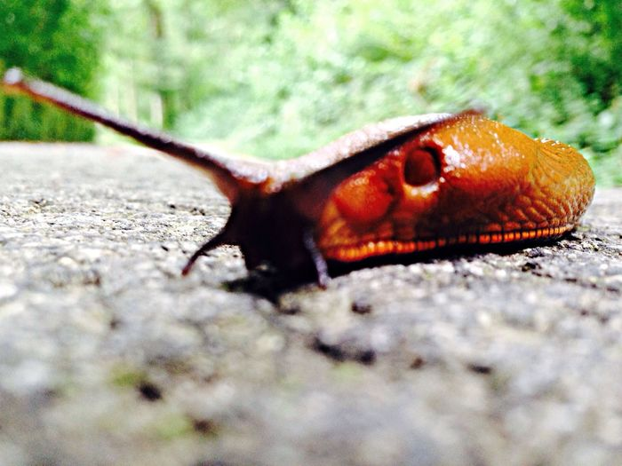 Beautiful Nature Snail
