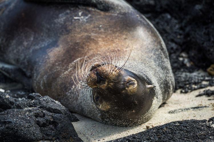 Close-up of seal sleeping at beach