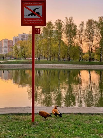 🌿 Spring Time 🌿 Park Evening Spring Springtime IPhoneography Duck Ducks Water One Animal Animal Themes Animal Plant Nature Lake No People Tree Reflection Sky Outdoors