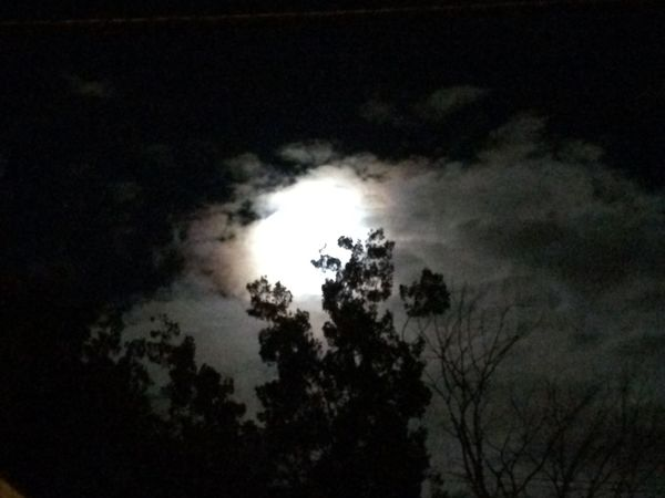 Creepy Night Moon