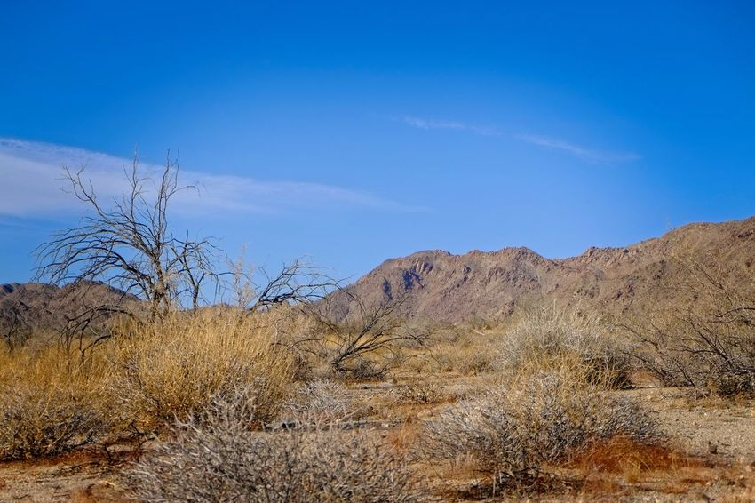 Colorado Desert Desert Joshua Tree National Park Mojave Desert Scenic California Desert California Nature Day Desert Beauty Landscape Nature Outdoors