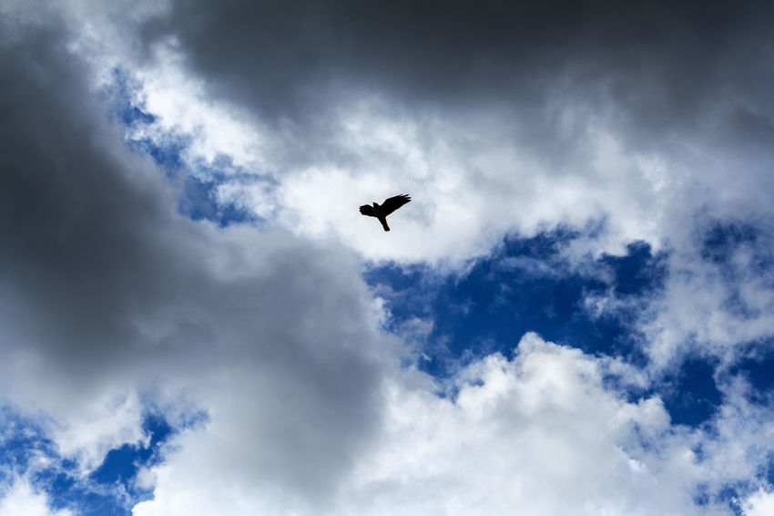 Flying Beauty In Nature Blue Cloud Cloud - Sky Cloudscape Cloudy Day Flying Low Angle View Mid-air Nature No People Outdoors Overcast Scenics Sky Tranquil Scene Tranquility Weather