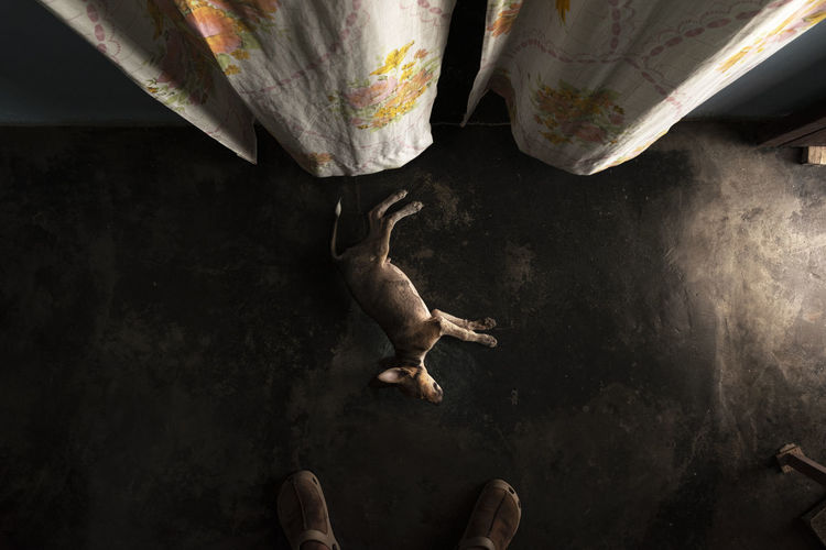 High angle view of dog napping on floor