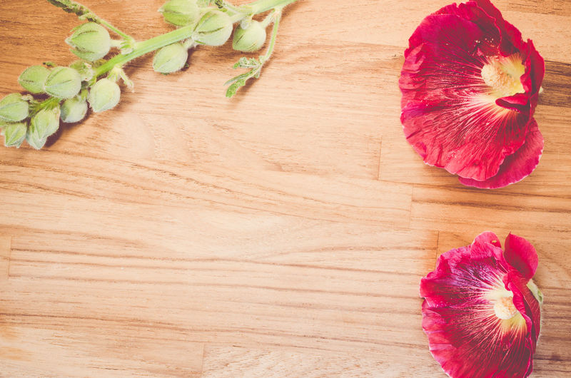 Directly above shot of red hollyhocks by buds on wooden table