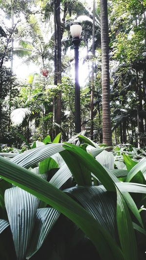 Park São Paulo Growth Green Color Day Plant Leaf Nature
