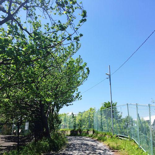 Footpath leading towards trees against blue sky