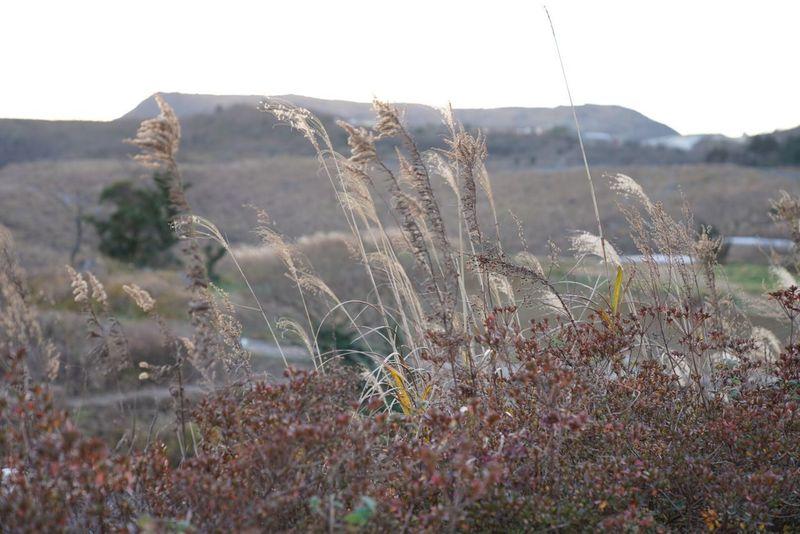 Grass Landscape Outdoors