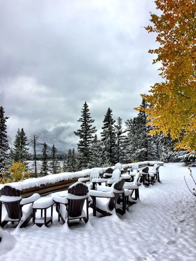 IPhoneography Canadian Rockies  Canada Winter Snow Cold Temperature Tree Plant Sky Nature Seat Cloud - Sky Table White Color No People Day Chair Beauty In Nature Absence Tranquility Covering Frozen Outdoors