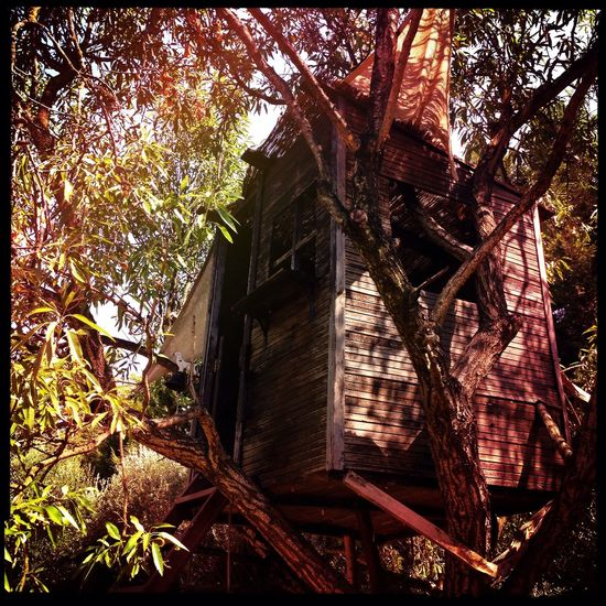 The tree house. Tree Treehouse Tree House Almondtree Summertime Hipstamatic